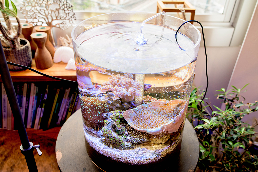 サンゴが入った円柱水槽