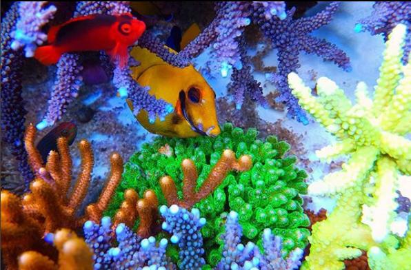 サンゴと海水魚