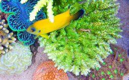 spsと海水魚の上手な飼育