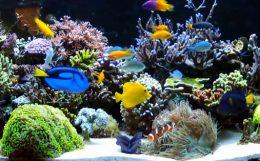 海水魚の混泳組合せ