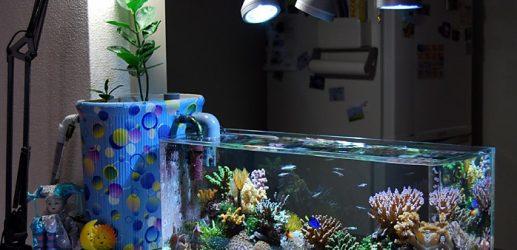 初心者でも出来る海水魚の飼育方法