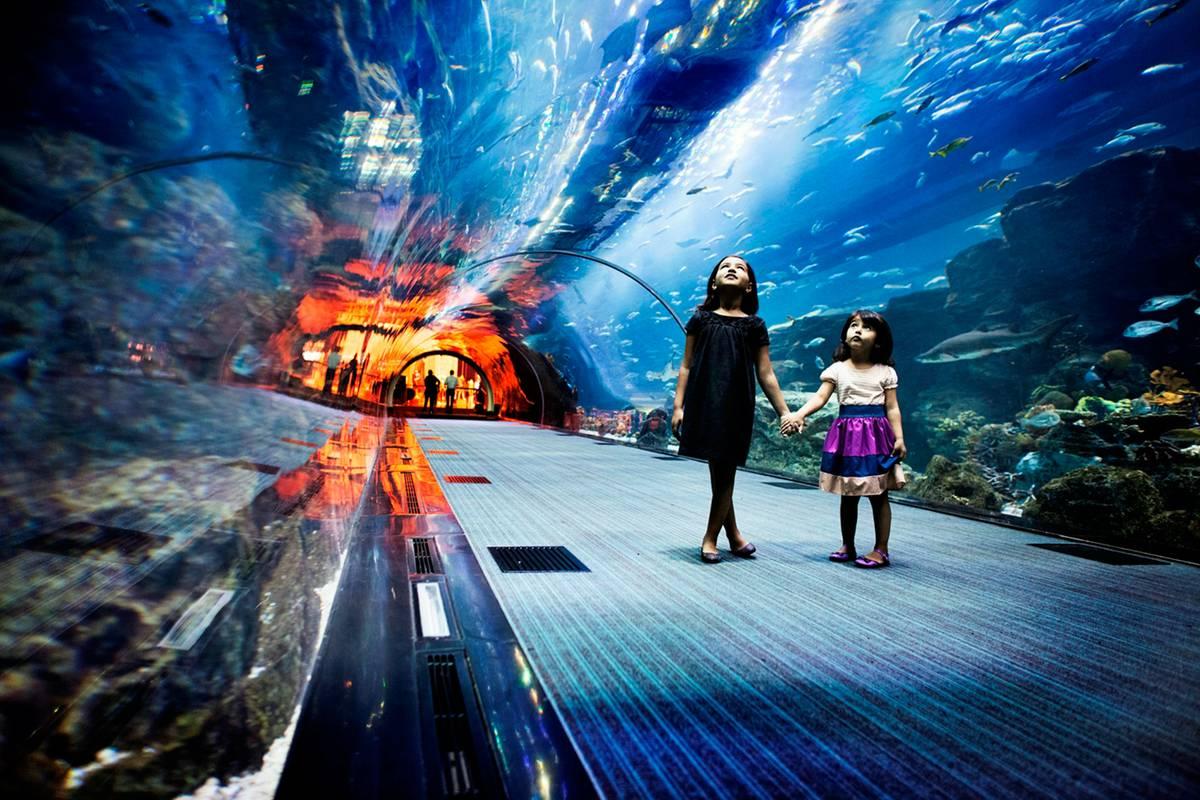 マイニング水族館