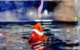 海水魚の餌付けについて