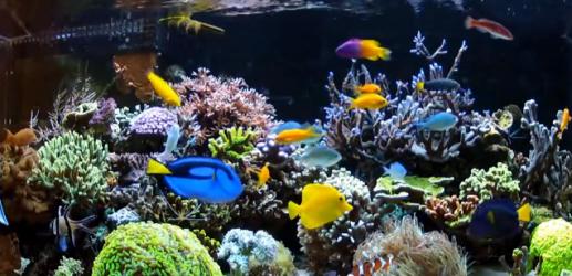 海水魚の混泳